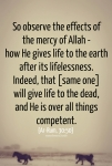 Mercy of Allah