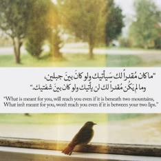 Wisdom: What is meant for you